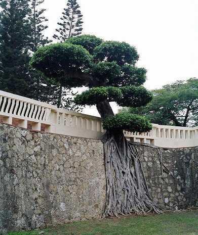 Ağaç yaşken eğilir atasözünün deyimin anlamı